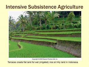 What Is the Global Pattern of Agriculture and Agribusiness ...