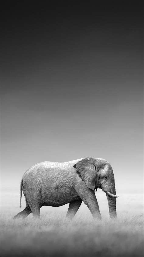 Wallpaper Iphone 8 Elephant by Elephant Wallpaper For Your Iphone 8 Plus From