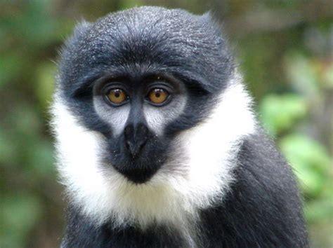 hear  evil   evil speak  evil monkeyland