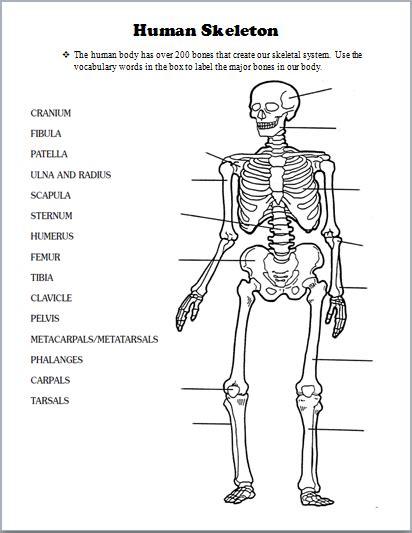 skeletal system human body activities human body
