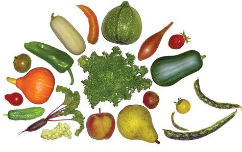 legumes de la famille des potirons picardie nature 1 232 re f 234 te des l 233 gumes anciens en picardie