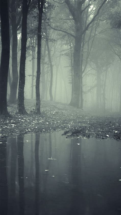 horror misty dark forest android wallpaper