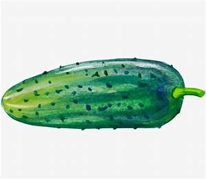 Cartoon cucumber, Cartoon Drawing, Cucumber, Vegetables ...