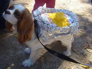 6 Last-Minute Dog Halloween Costume Ideas
