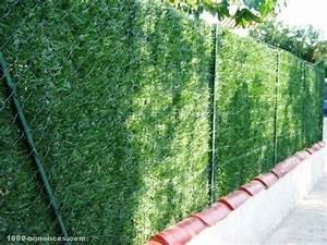 Haie Naturelle Brise Vue : cloture vegetale sans entretien ~ Premium-room.com Idées de Décoration