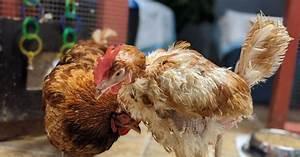 Animal Welfare Organization