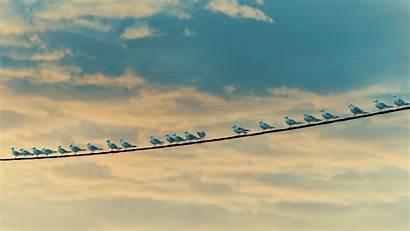 Birds Wire Seagulls Sky Clouds Uhd 4k