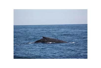 Whale Animated Lucas Cabo San Melissa