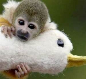 Monkeyfind Latest News Monkey Funny Animals Pictures ...