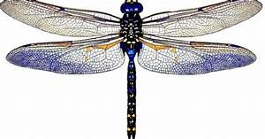 3d Dragonflies You Can Stick Anywhere