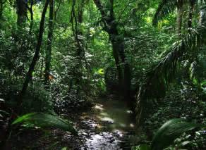 Amazon Rainforest Biodiversity
