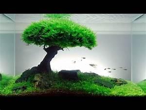 Deco Aquarium Zen : cara buat aquascape natural hd youtube ~ Melissatoandfro.com Idées de Décoration