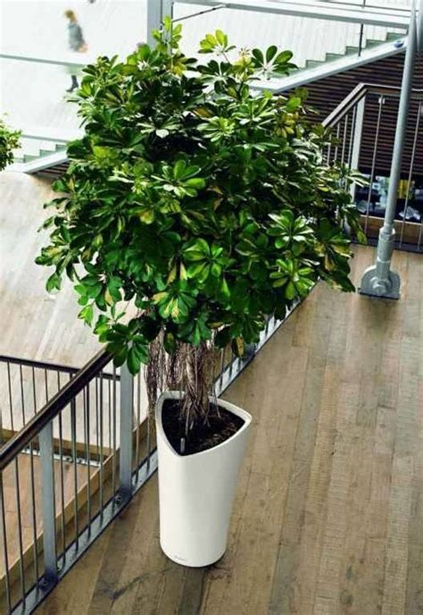 plants for a shady area which tall potted plants are great for indoor use in shady areas