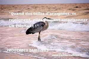 Se Débarrasser Des Araignées : proverbe zambien les proverbes zambiens ~ Louise-bijoux.com Idées de Décoration