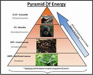 Image Gallery ecological pyramids