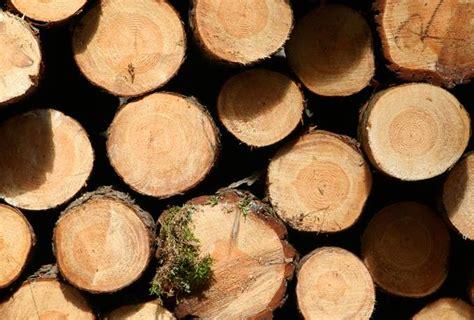 Log Timber Wood - Free Texture