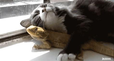 funny cat gifs animals