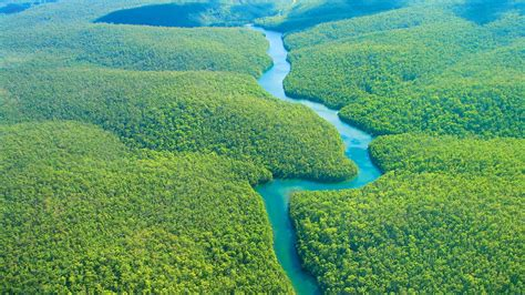 The Amazon  Amazon Rainforest In Brazil. Remodel Living Room Ideas. Blue Gray Yellow Living Room. Living Room Design Pictures. Fendi Living Room Furniture. Living Room Furniture For Apartments. Picture For Living Room Wall. Great Colors For Living Rooms. Swivel Chairs For Living Room Contemporary