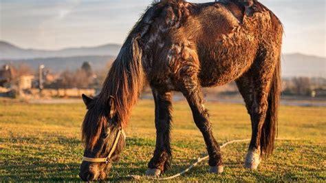 sommerekzem beim pferd  tun tiergesundde