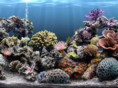aquarium ecran de veille images sim aquarium 201 cran de veille 3 8b58