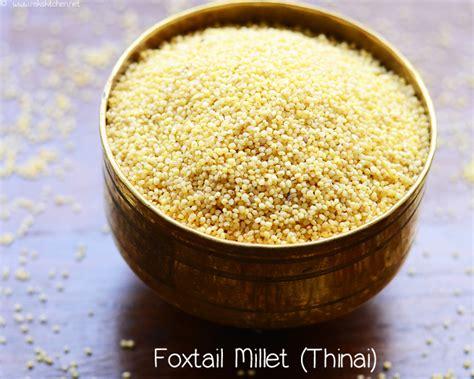 blender cuisine thinai paniyaram recipe foxtail millet recipes