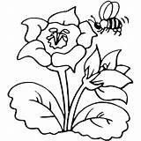Bee Coloring Pages sketch template