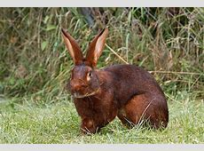 Kaninchen Infos, Tipps & süße Bilder
