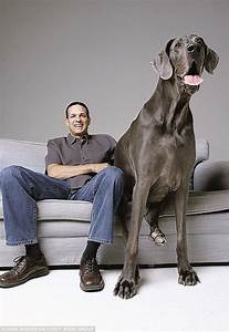 """""""Giant George"""" World's Tallest Dog Dies At Home - Science ..."""