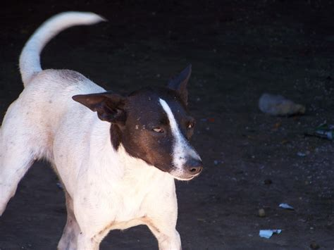 Small Dogs Available For Adoption Uitsig Animal Rescue Centre