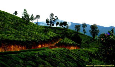 munnar hill hills india stations tea honeymoon travel travels waytoindia indian mystical