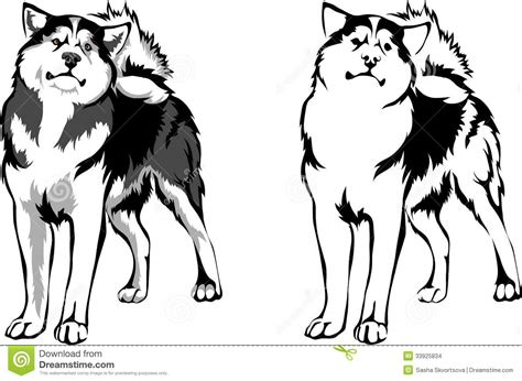 Vector Dog Breed Malamute Stock Images - Image: 33925834