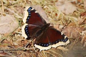 Einverständniserklärung Veröffentlichung Fotos Verein : fotowettbewerb 2013 2014 entomologischer verein ~ Themetempest.com Abrechnung