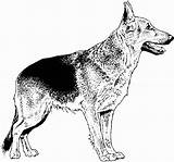 Coloring Dog Shepherd German Dogs Realistic Drawings Puppy Breed Colouring Printable Para Breeds Mandalas Dane Colorear Dificiles Children sketch template