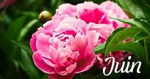 Que Planter En Juin : que faire dans son jardin au mois de juin ~ Melissatoandfro.com Idées de Décoration