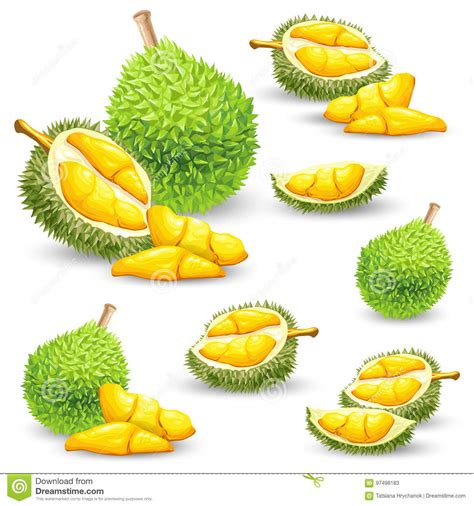 Durian Cartoons, Illustrations & Vector Stock Images ...