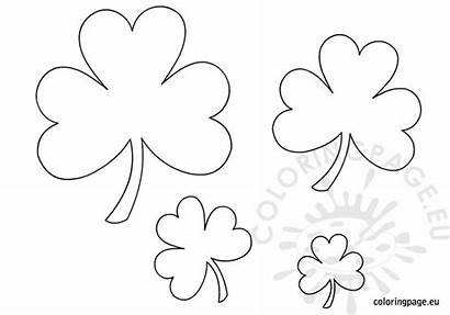 Shamrock Templates Printable St Patrick Coloring Shamrocks
