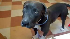 euthanized dogs put down mistake