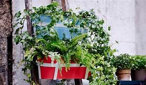 Wäscheständer Für Balkon Ikea : pflanzen f r balkon und garten immonet ~ Watch28wear.com Haus und Dekorationen