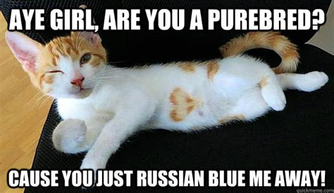 Aye Girl Meme - aye girl are you a purebred cause you just russian blue me away conversation opening cat