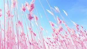 VS Pink Wallpapers for Desktop - WallpaperSafari