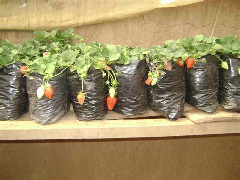 pflanzen bewässern pet flaschen 220 berleben mit h 228 ngenden pflanzen