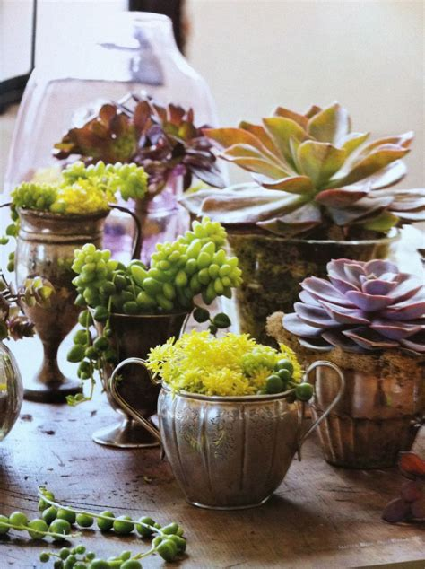 Succulent Succulents! A Collection Of Ideas To Try About