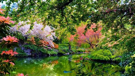 beautiful garden nature laptop full hd p hd
