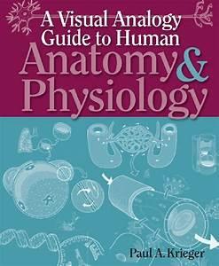 A Visual Analogy Guide To Human Anatomy  U0026 Physiology Pdf