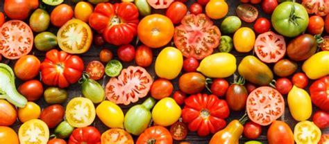 pomodoro in vaso coltivare i pomodori in vaso dimensioni contenitore e