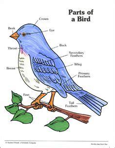 parts   bird printable parts   bird worksheet