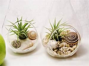 Tillandsien Im Glas : wunderbare glas deko ideen im glas deko im glas pinterest deko dekoration and und ~ Eleganceandgraceweddings.com Haus und Dekorationen
