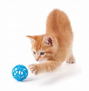 Mit Katze Umziehen : zubeh r f r katzen petspremium ~ Michelbontemps.com Haus und Dekorationen