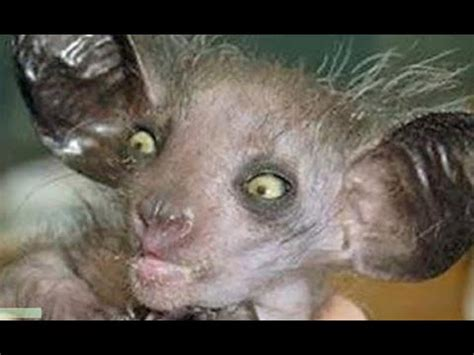 WORLDS MOST UGLIEST ANIMALS EVER YouTube