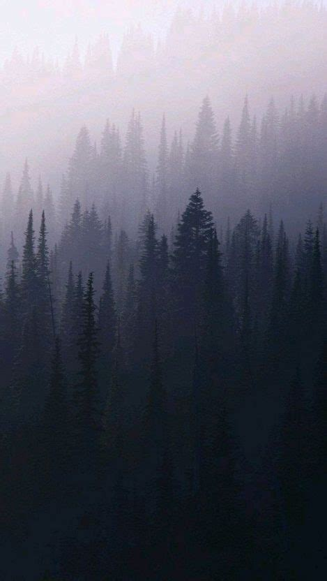 mist fog forest trees iphone wallpaper iphone wallpapers